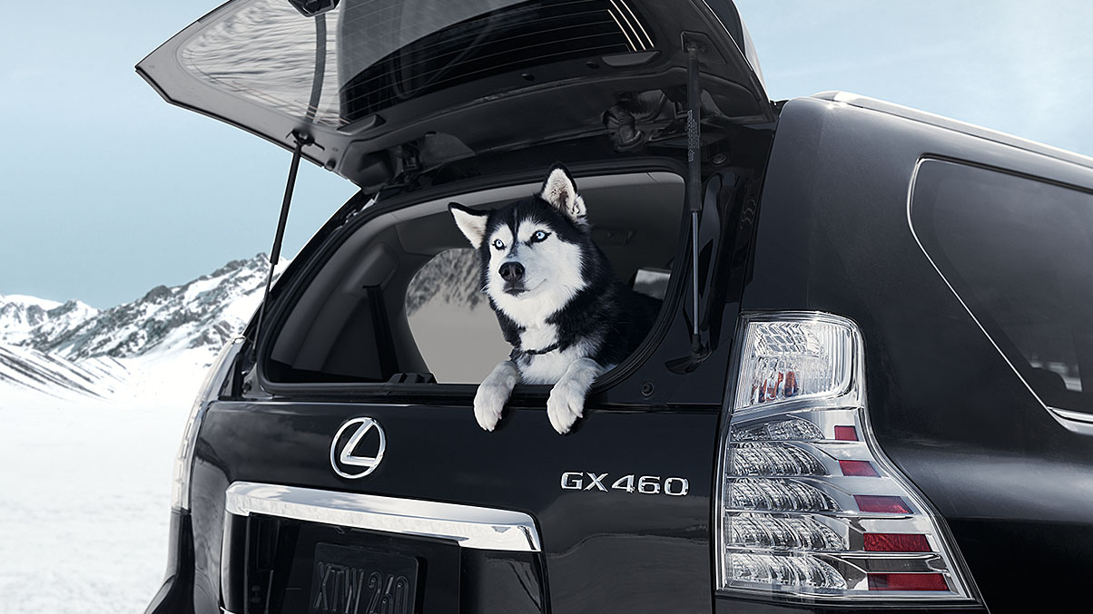 2019 Lexus GX 460 Performance